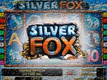 Играть на портале Вулкан 24 на реальные деньги в Silver Fox